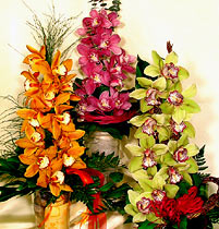 Virágposta - Ragyogó orchideák