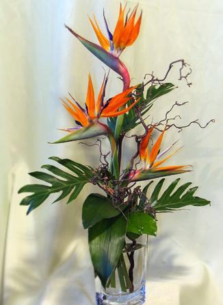 Virágposta - Trópusi madarak