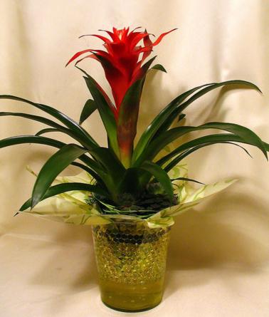 Virágposta - Bromélia modern díszítéssel