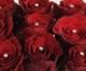 Virágposta - Vörösrózsák Swarovski kristályokkal