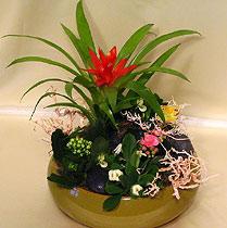 Virágposta - Virágsziget broméliával