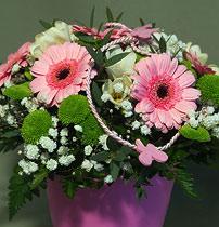 Virágposta - Tavaszi virágtál rózsaszín minigerberákkal
