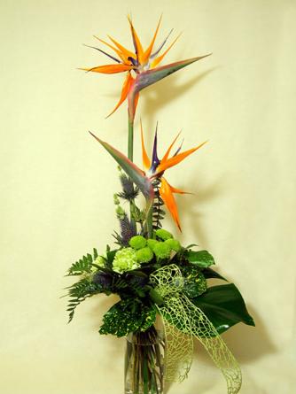 Virágposta - Köszöntés papagájvirággal