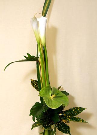 Virágposta - Anthúrium és kála
