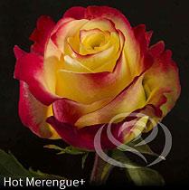 Virágposta - Hot Merengue - Rózsacsokor Virágküldés