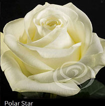 Virágposta - Polar Star - Rózsacsokor, virágküldés