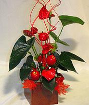 Virágposta - Anthurium modern kaspóban