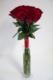 Virágposta - Vörös rózsák - jogarcsokor
