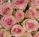 Virágposta - Rózsaszín rózsák kerek csokorban, 60 cm-es rózsákból