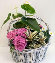 Virágposta - Cserepes virágok fonott kosárban