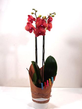 Virágposta - Virágzó orchidea díszítve - Érték és elegancia