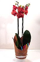 Ferrero - Virágzó orchidea díszítve - Érték és elegancia - work