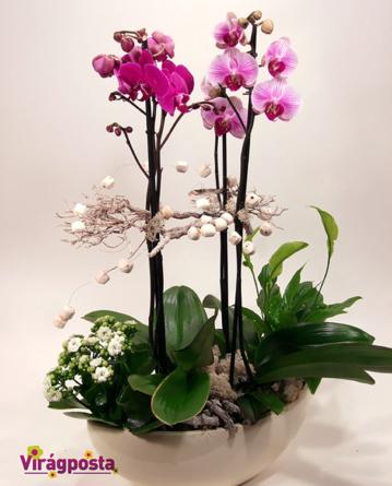Virágposta - Orchideák különleges csónaktálban