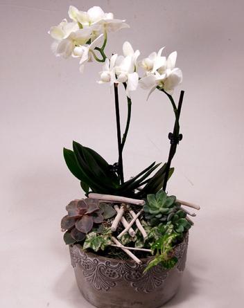 Virágposta - Orchidea és kövirózsák - összeültetés díszes kőtálban