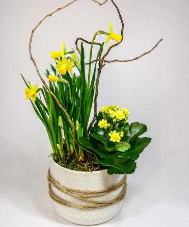 Virágposta - Tavaszi fény - összeültetés modern vonalú kaspóban