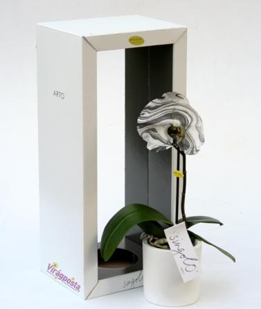 Virágposta - Orchidea Singolo Arto